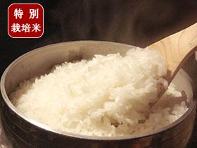 特別栽培米 つや姫