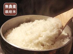 m_tokushima-try